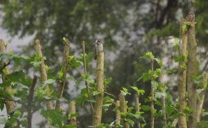 hummers-perch